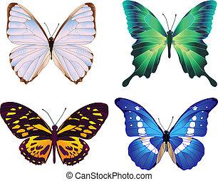 quatro, borboletas, coloridos