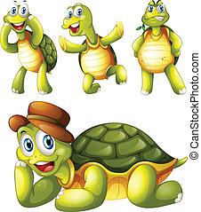 quatro, brincalhão, tartarugas