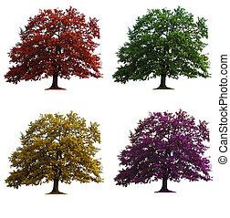 quatro, carvalho, árvores, isolado