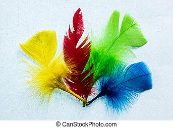 quatro, cores, penas