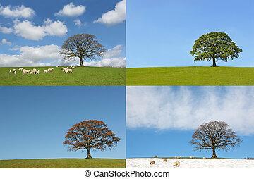 quatro estações, de, a, árvore carvalho