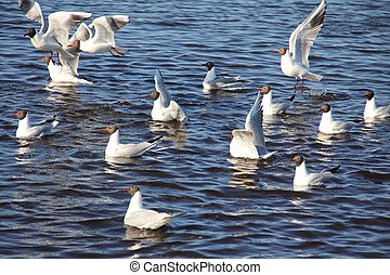 quatro, gaivotas mar