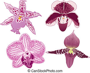 quatro, orquídeas