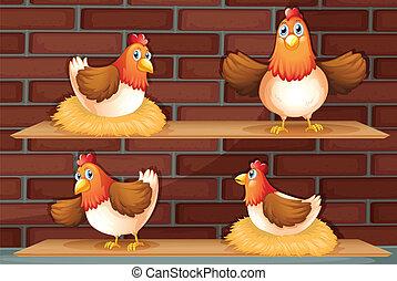 quatro, posições, diferente, galinha