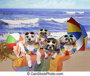 quatro, praia, cachorros