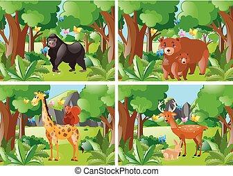 quattro, animali selvaggi, scena, foresta