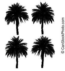 quattro, palmizi, silhouette, collezione, isolato, su, uno, sfondo bianco, con, percorso tagliente