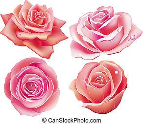 quattro, rosa, set