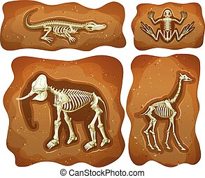 quattro, sotterraneo, differente, fossili