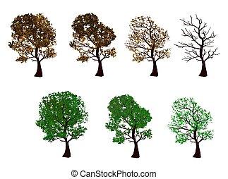 quattro stagioni, set, albero