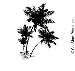 quattro, vettore, nero, illustrazione, palme