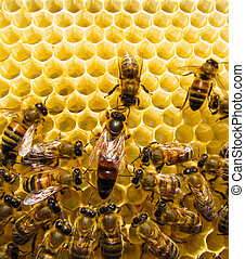 Queen bee is always surrounded by the workers - their ...
