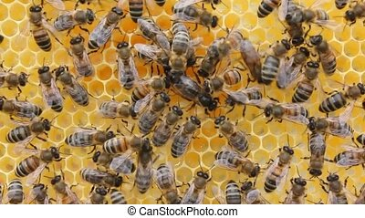 Queen bee lay eggs does not correctly. - Instead of laying...