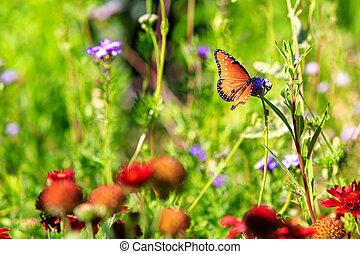 Queen Butterfly in Wildflower Garden