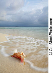 Queen Conch Shell - Queen Conch shell on a tropical beach
