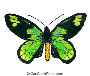 Queen Victoria' s birdwing butterfly painted with ink pens ...