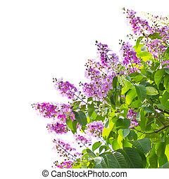 Queens crape myrtle flowers