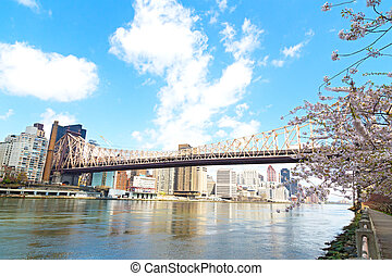 Queensboro Bridge and cherry blossom over Manhattan, New York city. The bridge over East River in New York, USA.