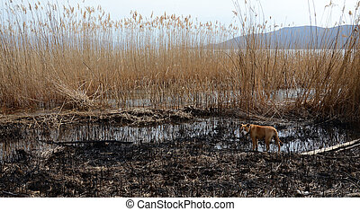 queimado, cana, ligado, um, praia, de, lago, prespa, macedonia