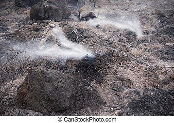 quemado, área, con, blanco, humo