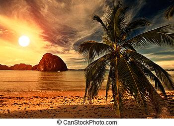 quentes, pôr do sol, tripical