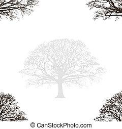 quercia, disegno astratto