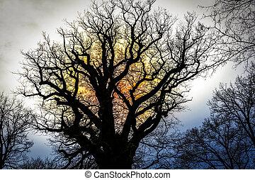 quercia, silhouette, contro, sole