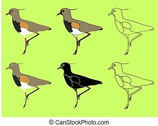 Quero Quero bird or Vanellus chilensis species. Common bird...