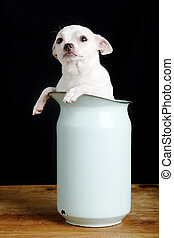 Question - A chihuahua with a questioning look in it\\\'s...