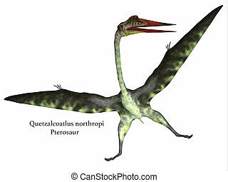 Quetzalcoatlus Reptile on White