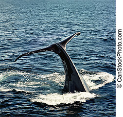 queue baleine