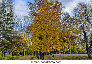 Quiet alley of the city park in golden autumnal decoration of nature