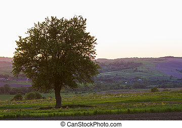 Quiet and peaceful view of beautiful big green tree at sunset growing alone in spring field on distant small village between green gardens and hills background. Beauty and harmony of nature concept.