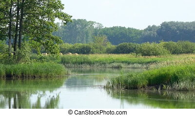 Quiet beautiful forest lake - . Summer forest landscape