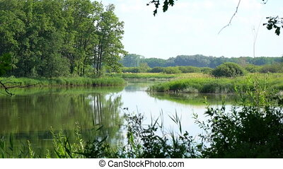 Quiet beautiful forest lake. Summer forest landscape