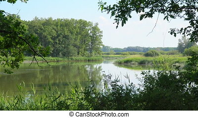 Quiet beautiful forest lake. Summer forest landscape.