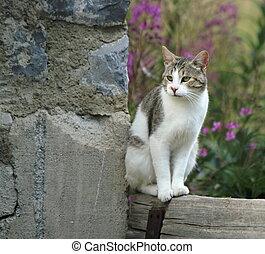Quiet cat