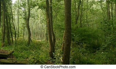 quiet early morning in forest - quiet early morning in a...