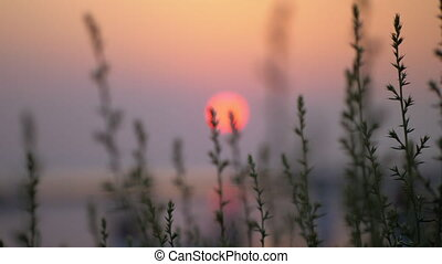 Quiet evening scenery with red sun and grass - Evening...