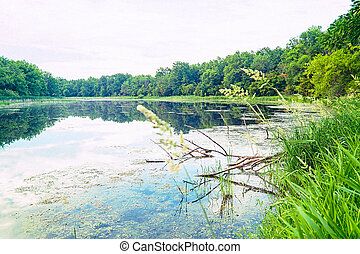 Quiet Forest Lake in Windless Weather