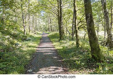Quiet Forest Path