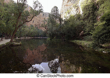 Quiet lake in the interior of a forest with beautiful reflections