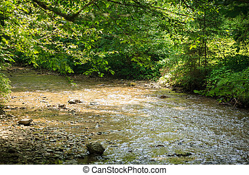 quiet mountain river in summer