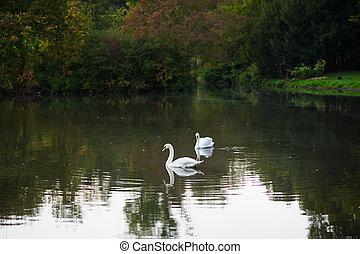 Quiet pond in the autumn park.