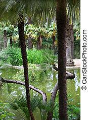 Quiet pool in a tropical garden