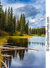 Quiet shallow lake