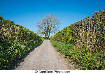 quiet single track country road bordered by high hedges Cumbria England
