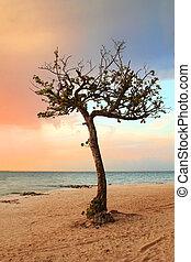 Quiet Tropical Tree in Paradise
