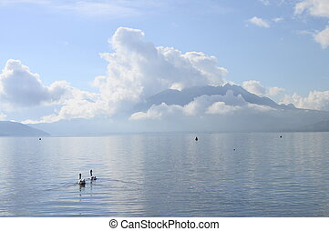 Annecy lake and mountains on winter morning with two white swans