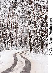Quiet winter landscape. Empty winding road in dense forest